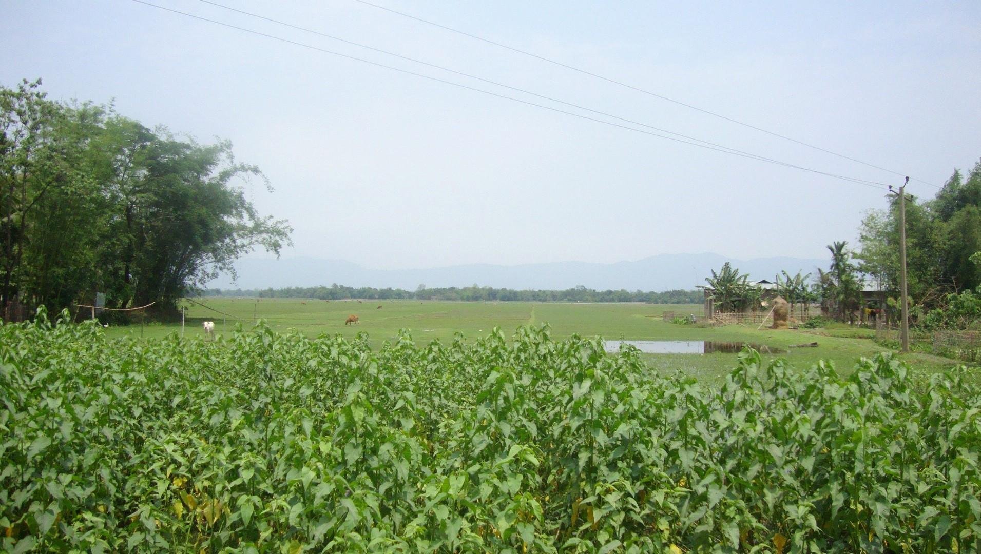 Projekt 484 - Indie - Dholai